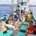 漁業はSEXで大漁